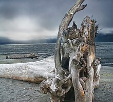 Driftwood on Vancouver Island by Randall Nyhof