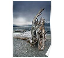 Driftwood on Vancouver Island Poster