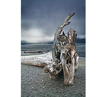 Driftwood on Vancouver Island Photographic Print