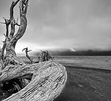 Black and White Photo of Driftwood on Vancouver Island by Randall Nyhof