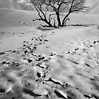 Dead Tree on Sleeping Bear Dunes by Randall Nyhof