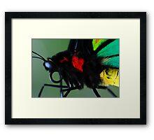 Cairns Birdwing II Framed Print