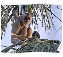 Gibbons Poster