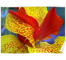 Canna Lily, Red & Yellow Poster