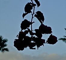 Bougainvillea Silhouette in the Sunrise by Svetlana Day