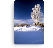 Frosted trees in January Canvas Print