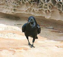 The Raven by Michael John