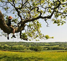 Child in tree  in the Weald of East Sussex by Catherine Ames