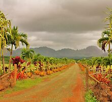 Hawaiian Plantation by Regina  Kappelman
