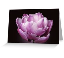 "Tulip ""Blue Diamond"" Greeting Card"
