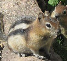 Two Speedy Little Chipmunks. by Maureen Dodd