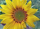 Little Sunflower by FrankieCat
