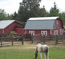 Old Red Barns & Horses in Corral. by Maureen Dodd