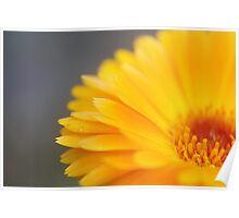 Orange Daisy Love Poster