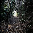 Pathway And Tree's by Josh  Glover
