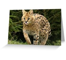Cheeky Serval! Greeting Card