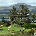 Irish island meadow by morrbyte