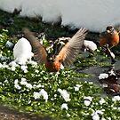 robin to take off  by yamiyalo