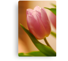 Gentle Tulip  Canvas Print