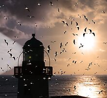 lighthouse flock by morrbyte