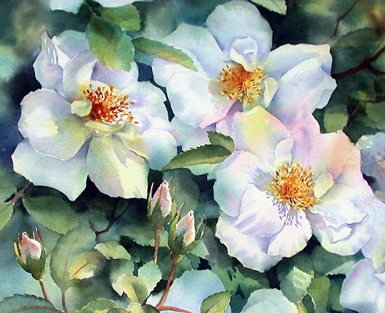 Nevada Rose by Ann Mortimer