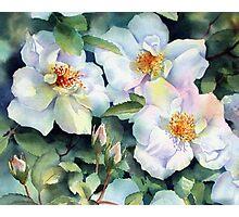 Nevada Rose Photographic Print