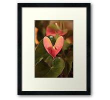 lily of love  Framed Print
