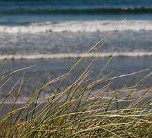 long dune grass by morrbyte