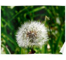Blow me away-Dandelion Poster