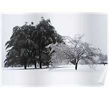 Ice Trees Poster