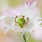 Shaggy by Mandy Disher