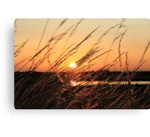 Beautiful Sunset Shining Though Grass Canvas Print