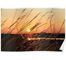 Beautiful Sunset Shining Though Grass Poster