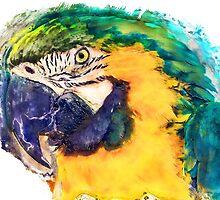 Parrot by JBJart
