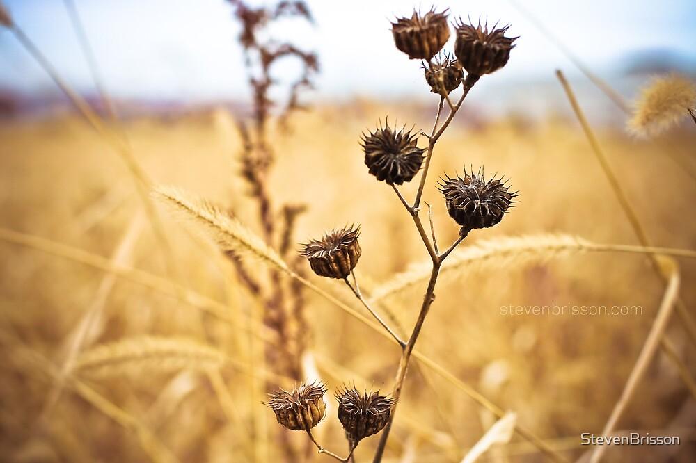 Faith is like a kernel of wheat. by StevenBrisson
