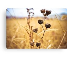 Faith is like a kernel of wheat. Canvas Print