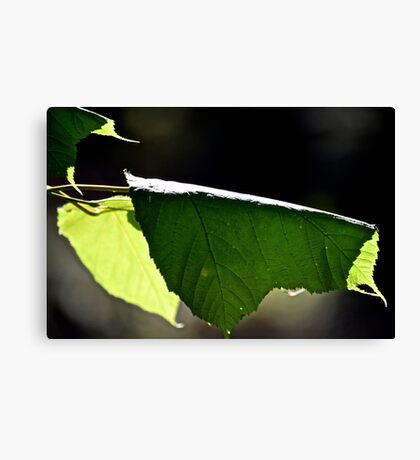 Dark leaf Canvas Print