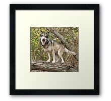 Ruedi the tree wolf Framed Print