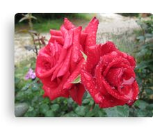 'RAINDROPS ON ROSES!' Red Cardinal standard. Canvas Print