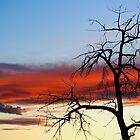 Skeleton Tree - Kelowna Sunset by LAaustin