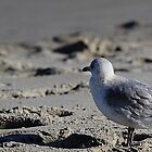 Gull-iver's Travels by mojo1160