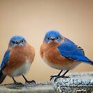 Grumpy Little Men by Bonnie T.  Barry