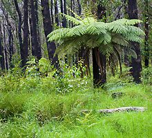 Regrowth at Marysville, Victoria by Pauline Tims