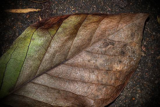 leaf by Conor  O'Neill