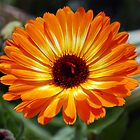 Orange Delight by Don Wright