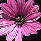 Pink Flower by Craig DeRuyter