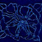 BLUE ROSE by NEIL STUART COFFEY