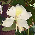 White Flower by eruthart