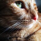 Close up cat. by queenxtc