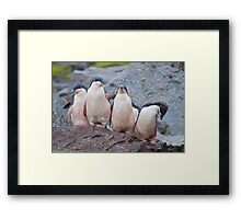 Pink Pingos (Adelie Penguin Chicks, South Orkneys) Framed Print